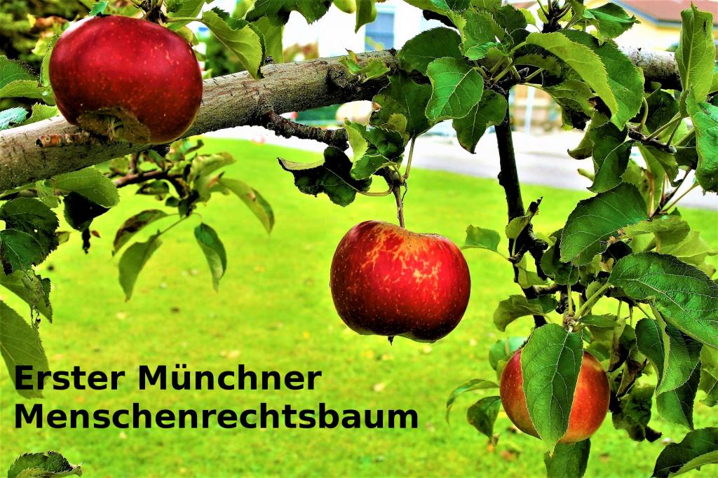 Erster Münchner Menschenrechtsbaum